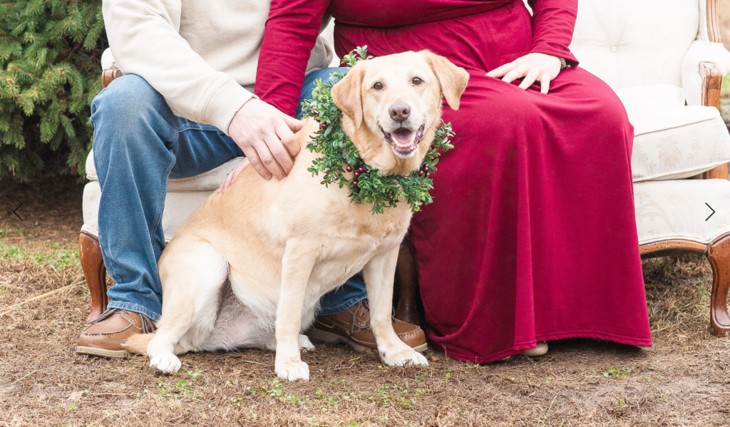 Dog during maternity session by Katelyn Prince Photography